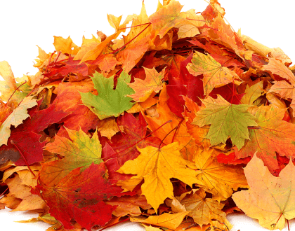 leaves, raking, chronic pain, physical therapy